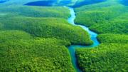 Monitoramento, desmatamento, america latina, amazonia, wri, reforestation monitoring
