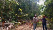 desmatamento amazônia deforestation amazon brasil brazil