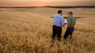 IBM Agricultura Digital blockchain