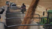 Colheita trigo Los Grobo